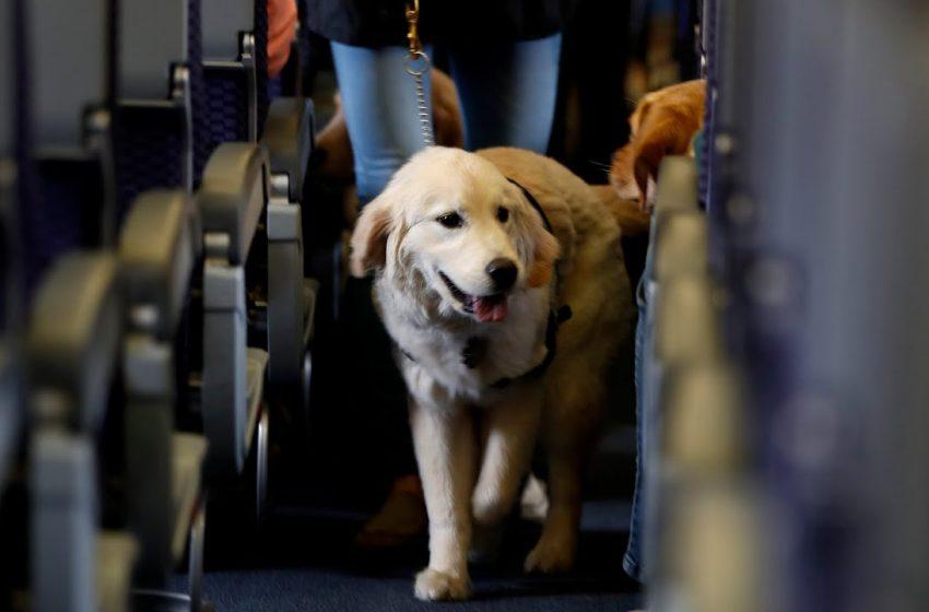 El aeropuerto de Helsinki emplea perros para detectar la covid-19