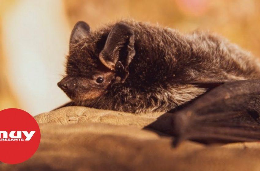 Los murciélagos no son el enemigo