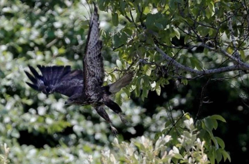 Esta es la inesperada causa que más mata a las aves rapaces en España. Vía @Ciencia_EE …