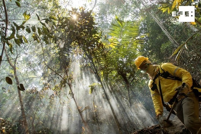 El 40% del Amazonas puede convertirse en un ecosistema tipo sabana.   …
