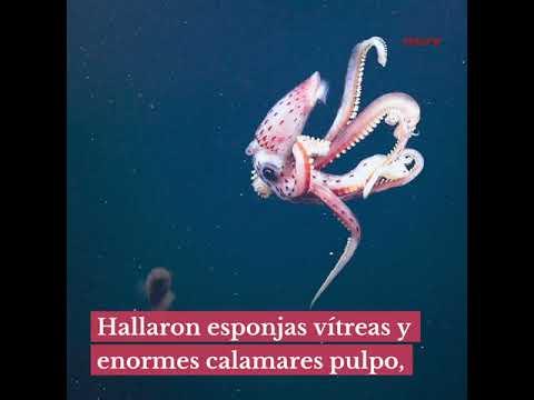 Descubren 30 nuevas especies submarinas en Australia