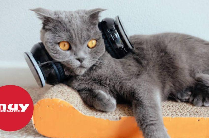 ¿Cuál es la mejor música para calmar a un gato?
