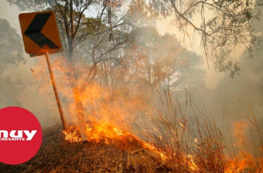 En los incendios de Australia ardieron el 21 % de sus bosques
