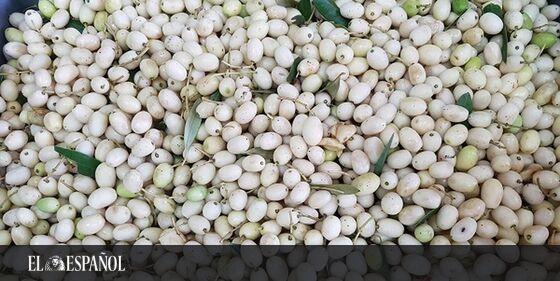 Este es el aceite de oliva más desconocido de España: aún más rico en antioxidantes …