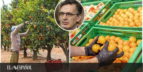 #LoMásLeído | La obsesión de Mercadona por tener buenas naranjas españolas, la fruta de ahora: los 9 proveedores …