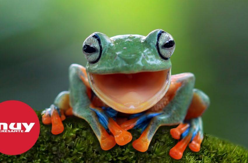 Crean máquinas vivas a partir de células de rana