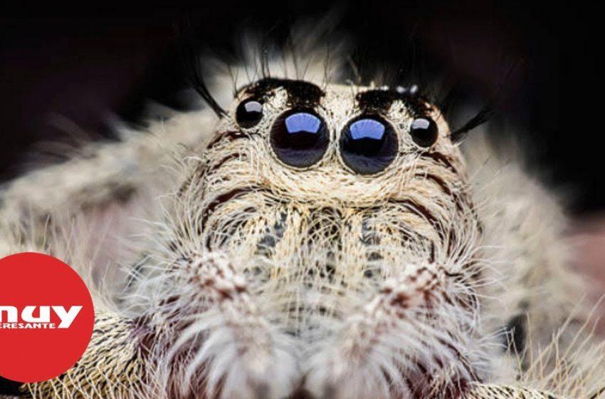 ¿Por qué no deberías matar a las arañas de tu hogar?