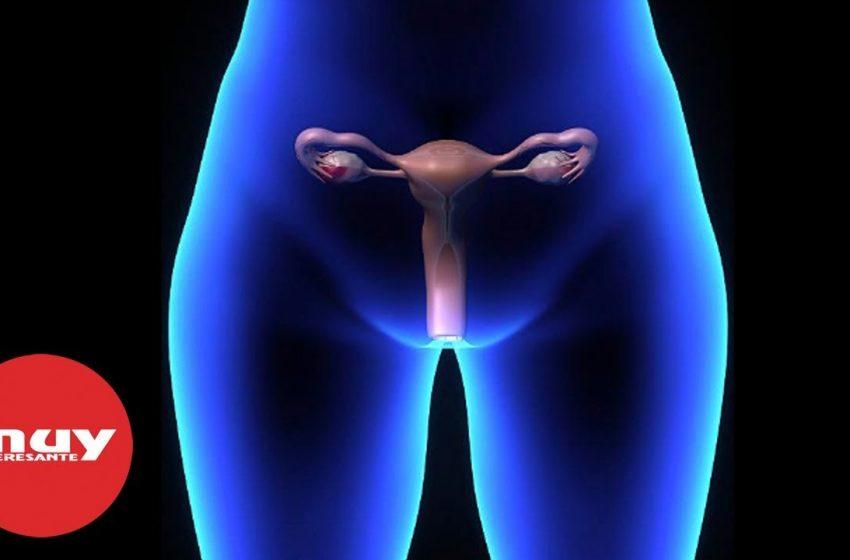 Curiosidades sobre la vagina