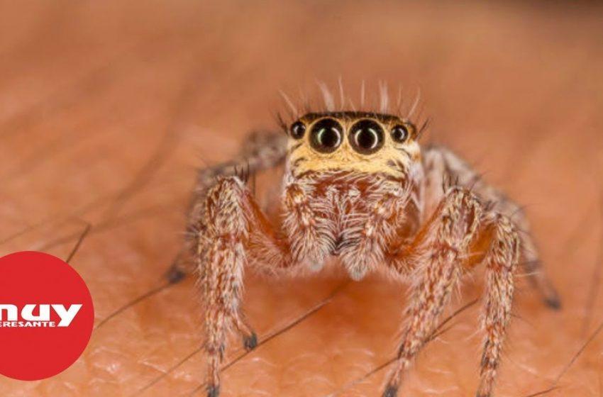 Las arañas más fascinantes del planeta