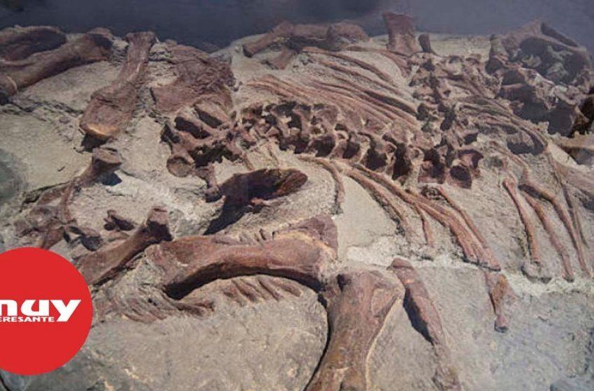 Descubren los fósiles de una manada de dinosaurios
