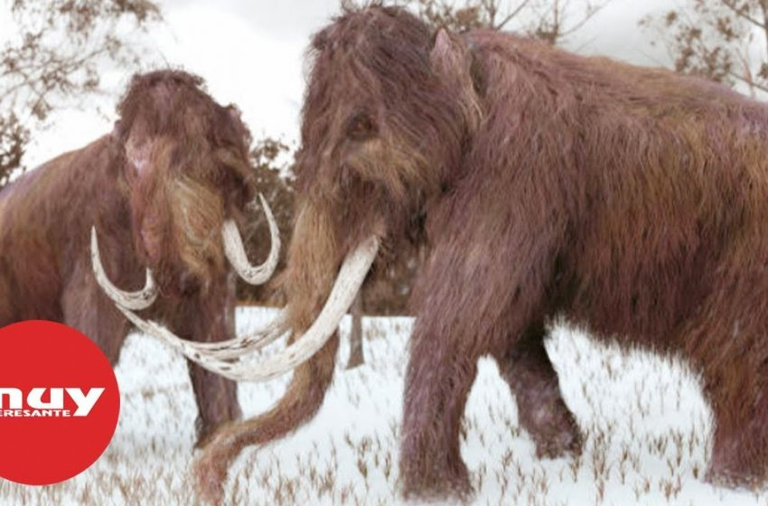 Científicos reviven el ADN de un mamut lanudo
