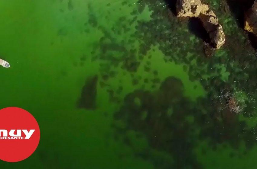 El océano cambiará de color a finales de siglo