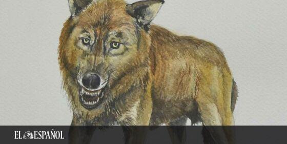 #Paleontólogos | Nuevo hito científico español: hallada en Granada una especie desconocida de lobo, informa @Ciencia_EE…