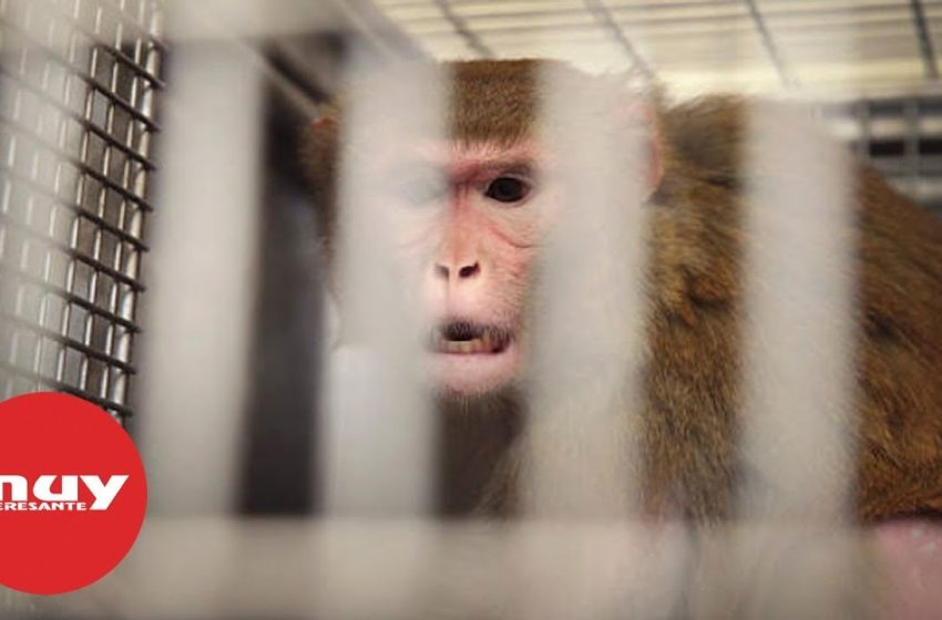 ¿Qué son las 3Rs en la experimentación con animales?