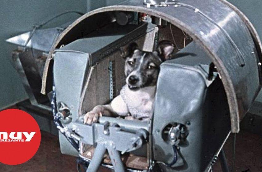 Laika, primer ser vivo en ponerse en órbita con la Tierra