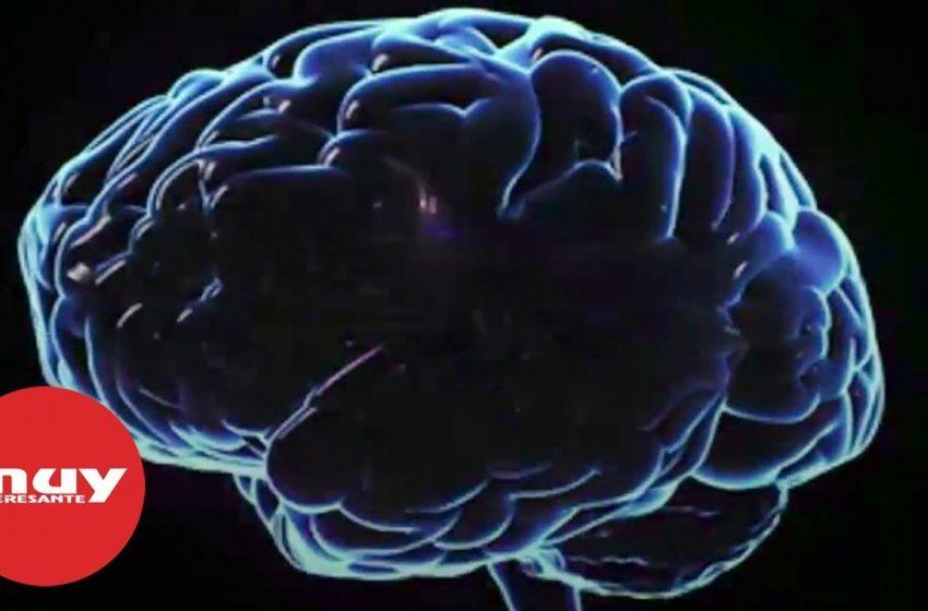 Así procesa el miedo el cerebro