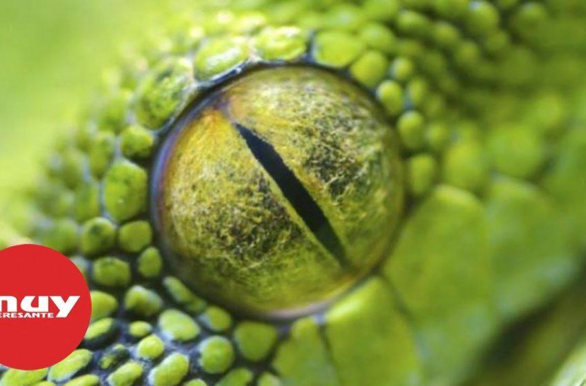 Los ojos de la naturaleza